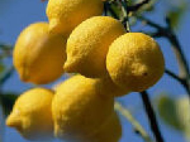 I limoni del Parco Alto Garda
