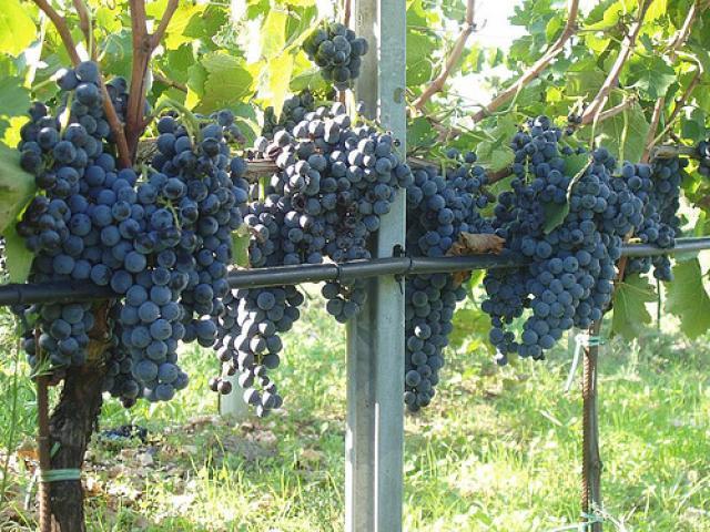 I Vini di Salerno