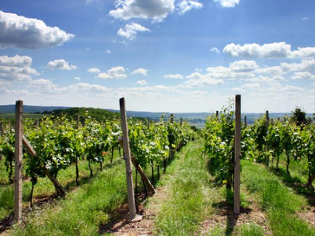 Bologna e i suoi vini