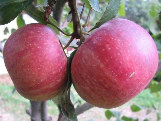 Tra dolci i meleti del casertano e l'aspra bellezza del Parco del Matese