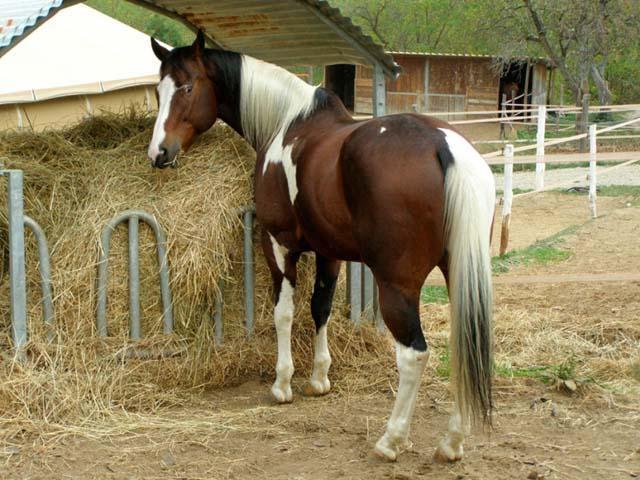 A cavallo sull'Appennino Tosco Emiliano