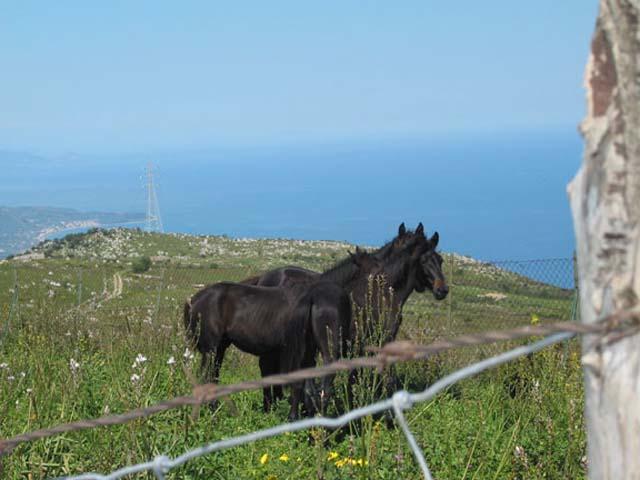 Parco dei Nebrodi: le Montagne Verdi della Sicilia