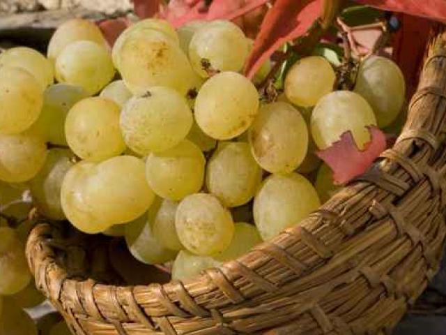 Riviera del Brenta il vino di Venezia