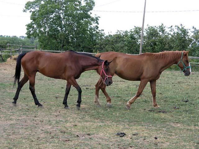 A cavallo oltre le Terme