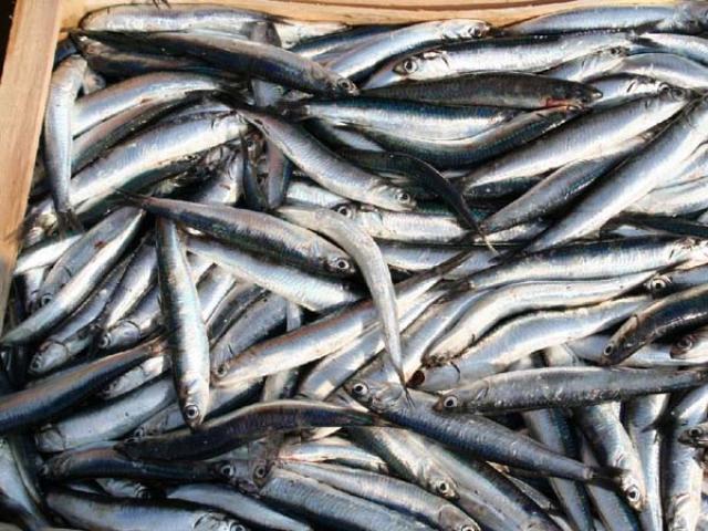 Pescato a La Spezia