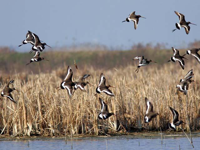 Il Parco Regionale del Delta del Po