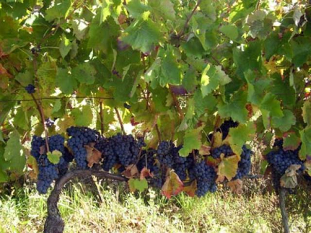 Terre dell'Alta Val d'Agri un vino di Potenza