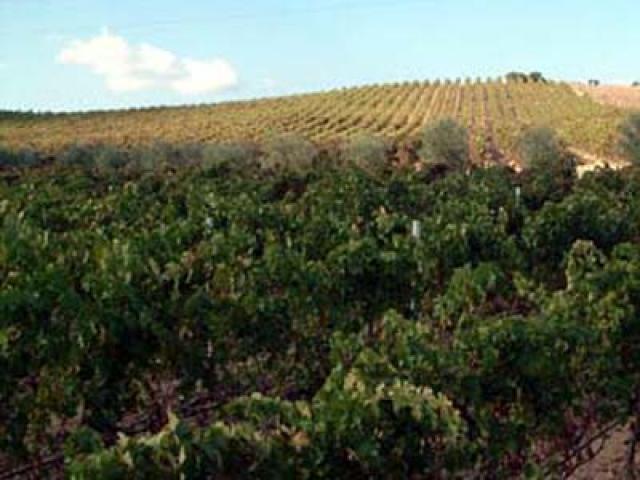 Carignano del Sulcis il rosso di Carbonia - Iglesias