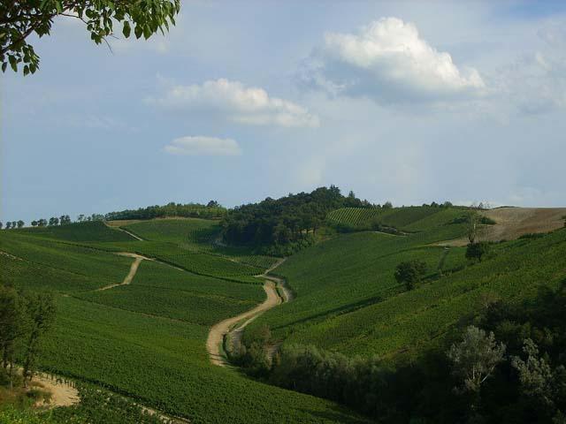 Mountain bike in Valle Curone, tra i vitigni dell'Oltrepò