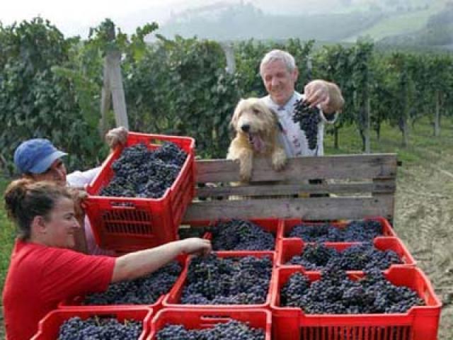Verduno Pelaverga un pregiato vino di Cuneo