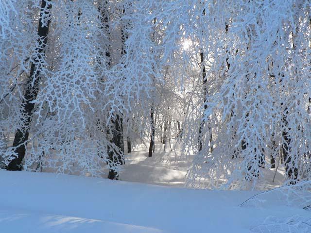 Divertirsi sugli sci a Prato Selva