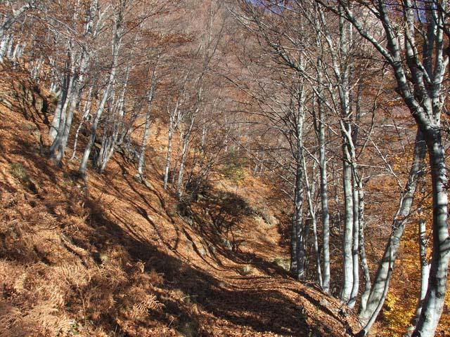 Percorsi di trekking sulle Alpi torinesi