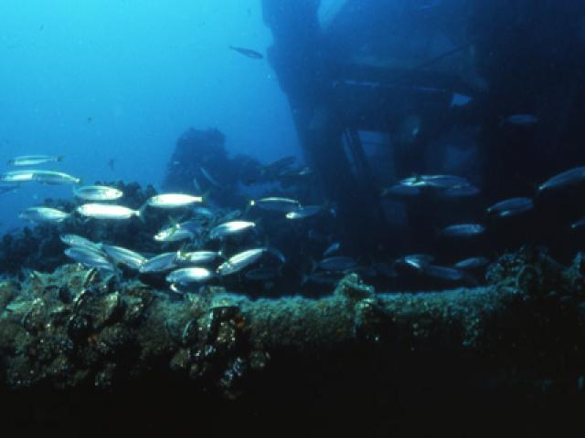 Diving a Porto Corsini sulla piattaforma