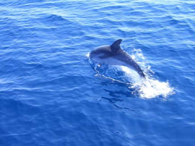 Scoprire il whale-watching a Imperia