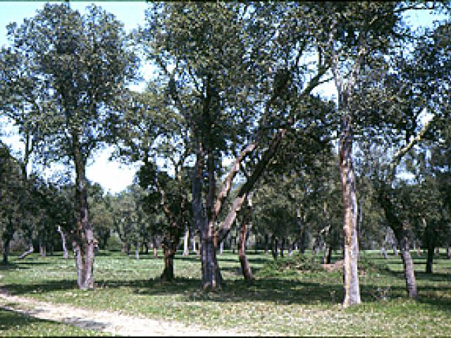 Bosco di Santa Teresa e dei Lucci