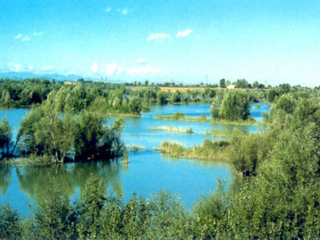 Cassa di espansione del fiume Secchia