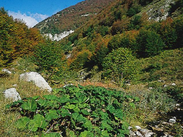 Riserva della Valle dell'Orfento