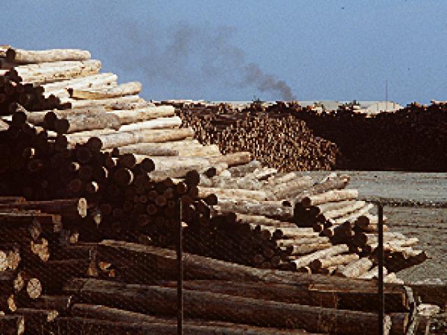 Lavorazione del legno a Bassano del Grappa