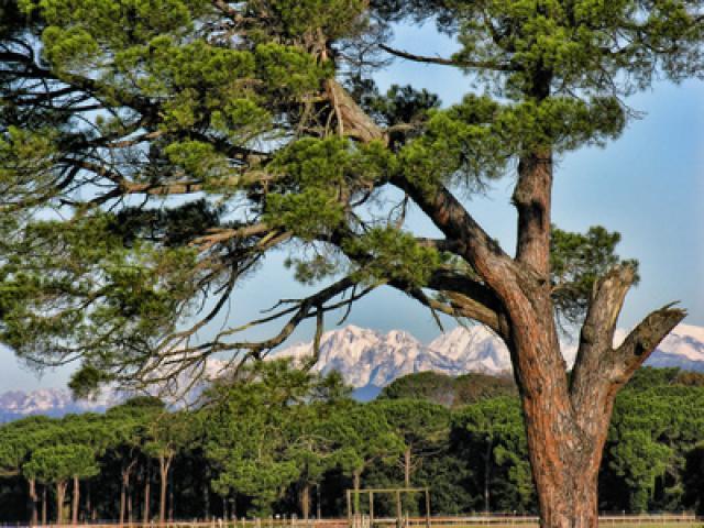 Parco Naturale Regionale di Migliarino, San Rossore, Massaciuccoli