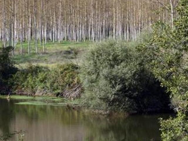 Parco di Roccamonfina-Foce Garigliano