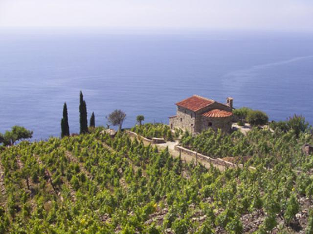 Vini DOC Isola d'Elba