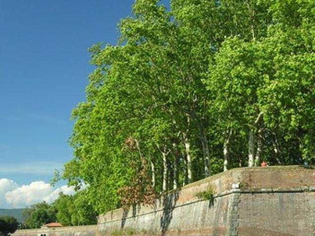 La cinta muraria di Lucca