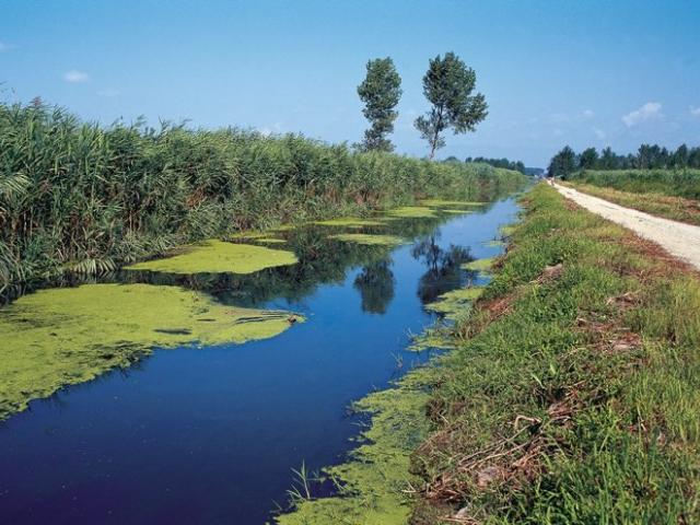 Riserva Naturale Regionale Padule di Fucecchio