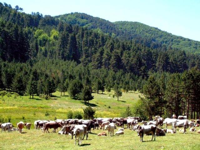 Il Parco Nazionale della Sila