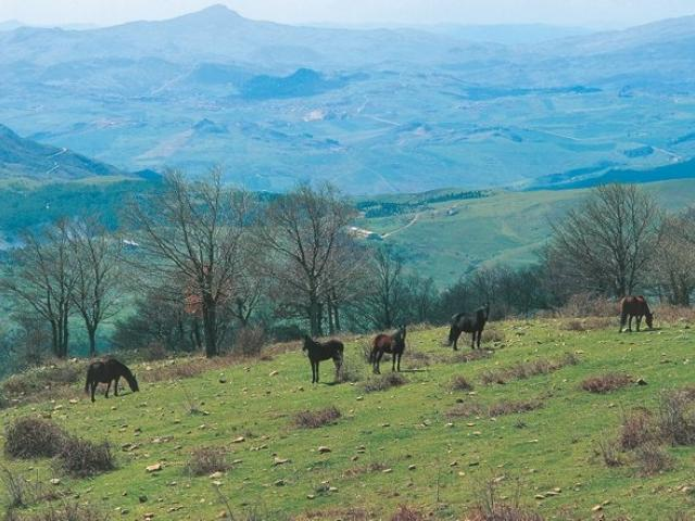 Parco regionale dei Nebrodi
