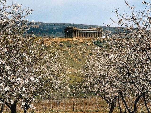 Mandorli in fiore - Valle dei Templi