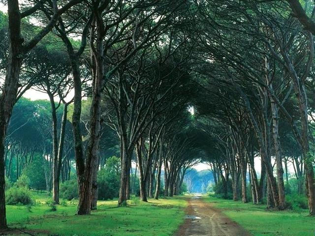 Parco Naturale di Migliarino, San Rossore e Massaciuccoli