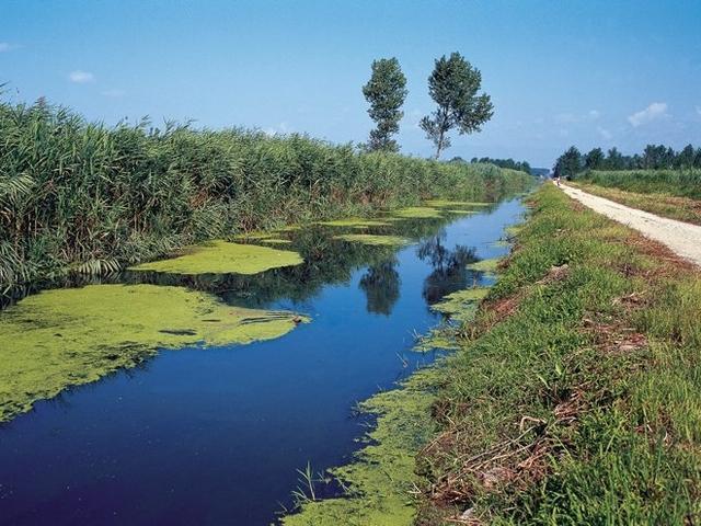 Canale nel Padule di Fucecchio