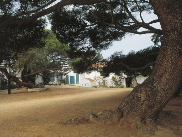 albero di Clelia - casa di Garibaldi