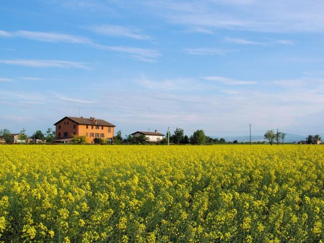 Campagna modenese