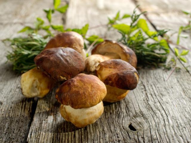 Scottiglia di funghi e cinta senese
