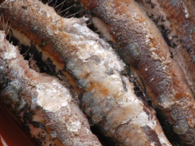 Filetti di Sardoncini al sale di Cervia