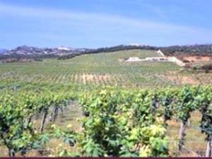 Azienda Vinicola Pedra Majore