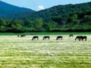 Consorzio Gusta La Maremma_cavalli allo stato brado