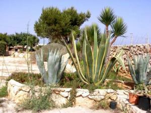 Esterno con piante grasse