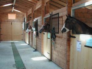 Scuderia e cavalli