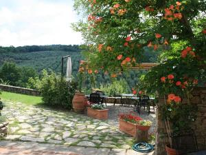Veranda e oliveto