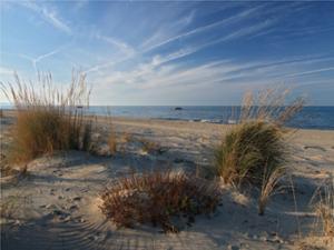 Le dune adiacenti al Lido Cala D'Or