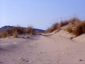 Le dune di Petacciato