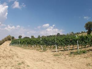 Agriturismo La Casella