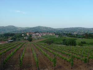 Azienda Agricola Rocca Dell'Angelo