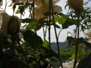 Giardino delle rose