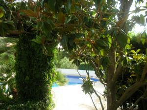 Scorcio piscina dal giardino