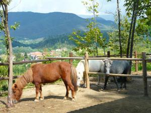 I cavalli della Giara