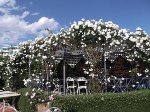 Le rose del giardino