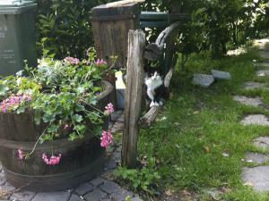 Il gatto nel giardino